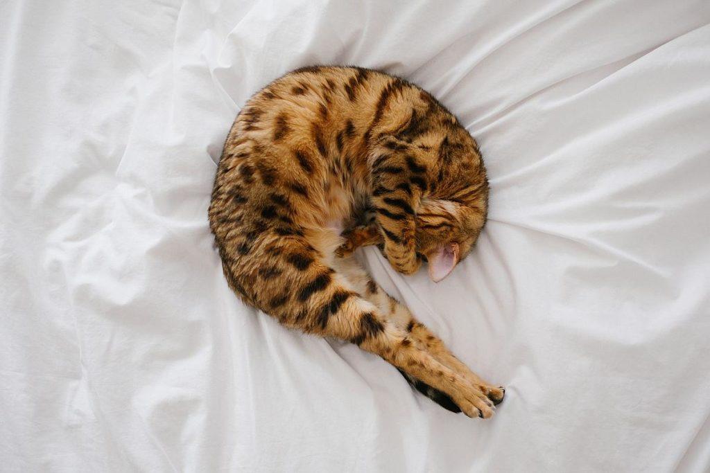 macka na krevetu